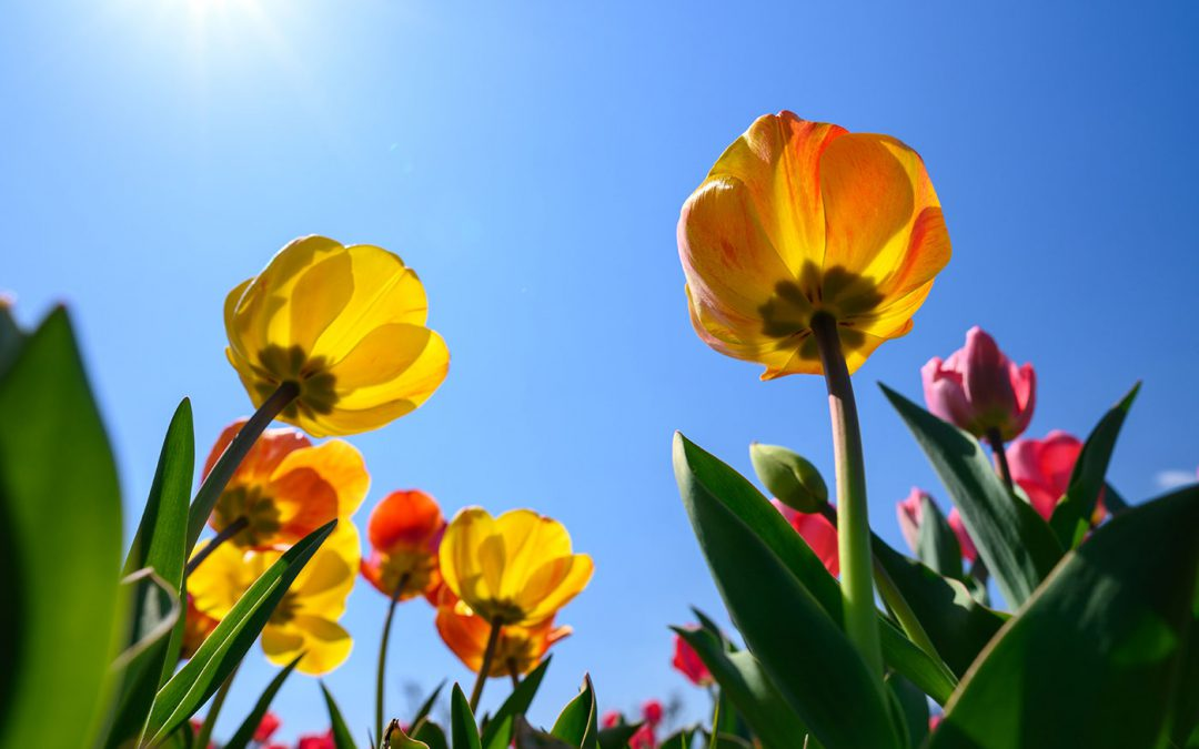 How to Spruce Up Your Home for Spring